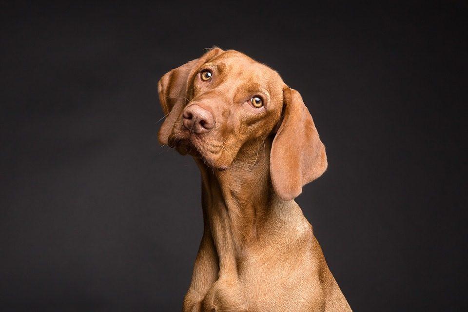 The Best Dog Market - Post Thumbnail
